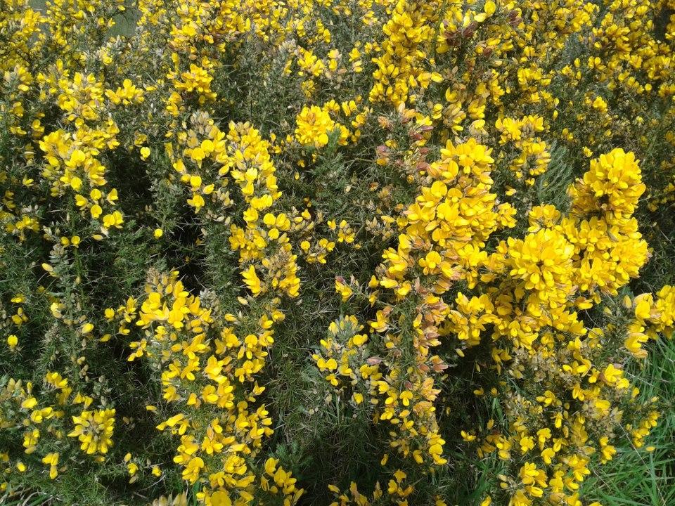 Flores Lourido 5