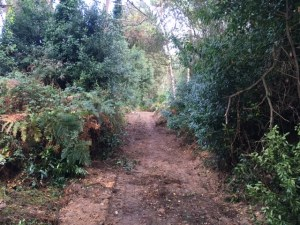 camino-3