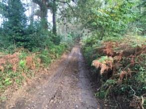camino-4