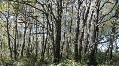 Bosque no val fluvial.