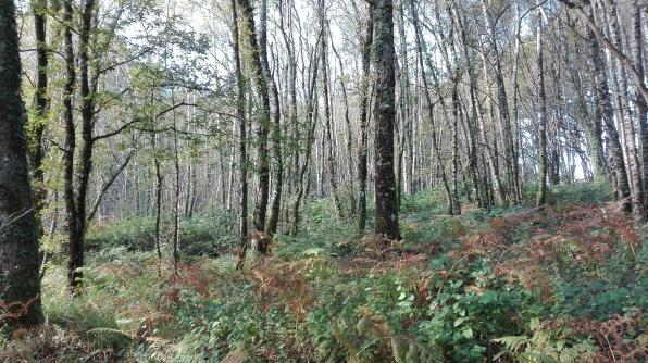 Bosque autóctono.