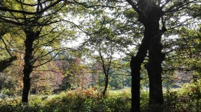 Outono no val fluvial.