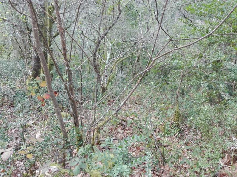 Bosque de ribeira, val fluvial do río Lourido, Corcoesto.