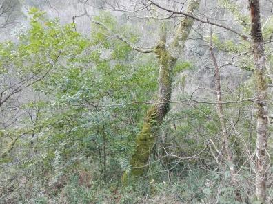 Bosque de ribeira, val fluvial do Lourido, Cereo.