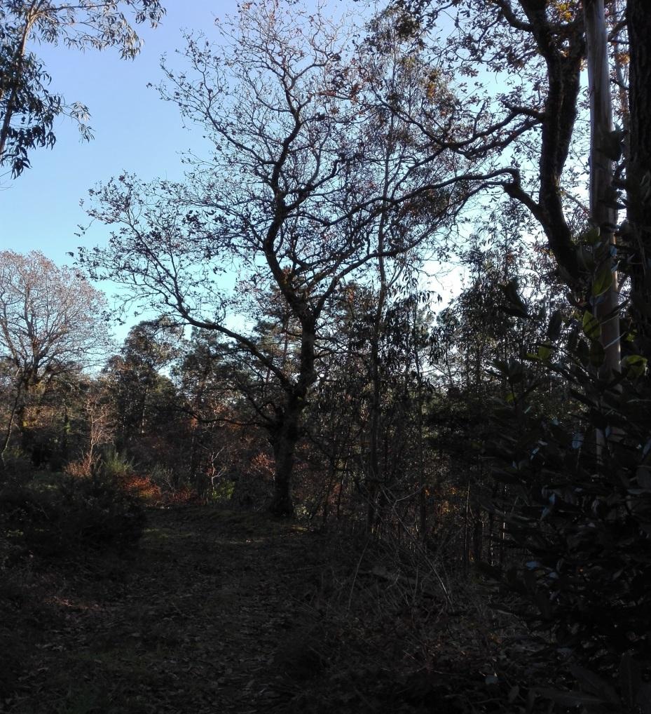 árbore singular 2.jpg