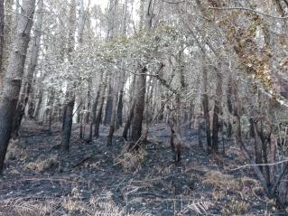 Incendio nos montes de Corcoesto o 24 de xuño deste ano.