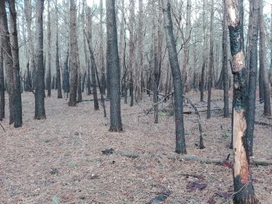 A imaxe negra das áreas afectadas polos incendios.