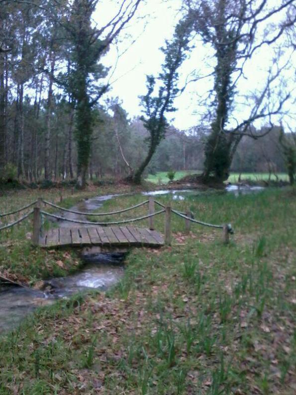 Ponte de madeira sobre regato na carballeira de Sta. Mariña do Remuíño