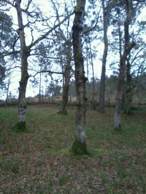 Bosque en Corcoesto