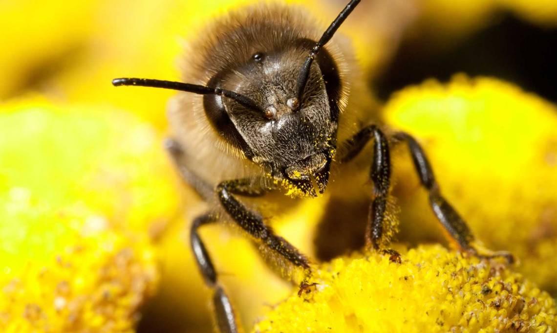 herbicidas-que-matan-abellas.jpg