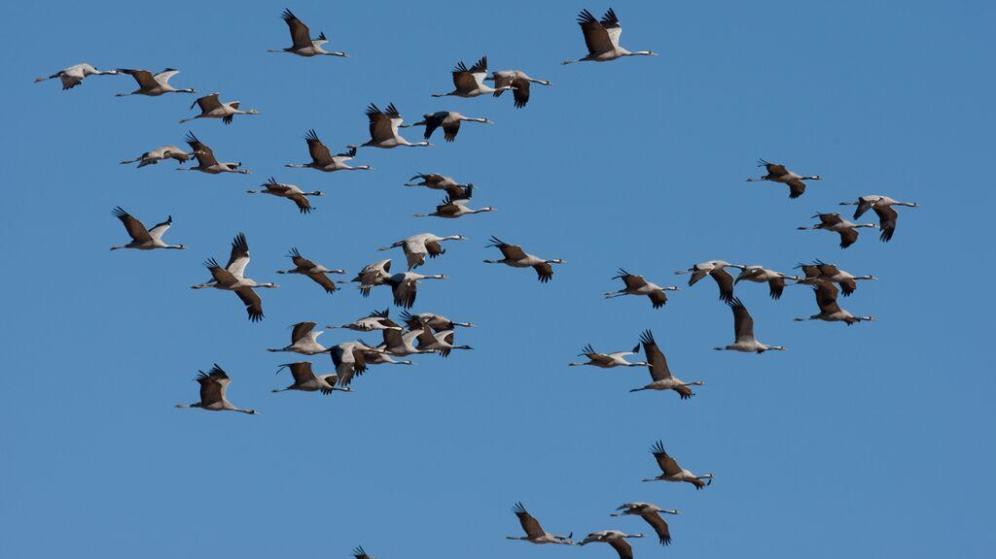 aves ameazadas Lespe
